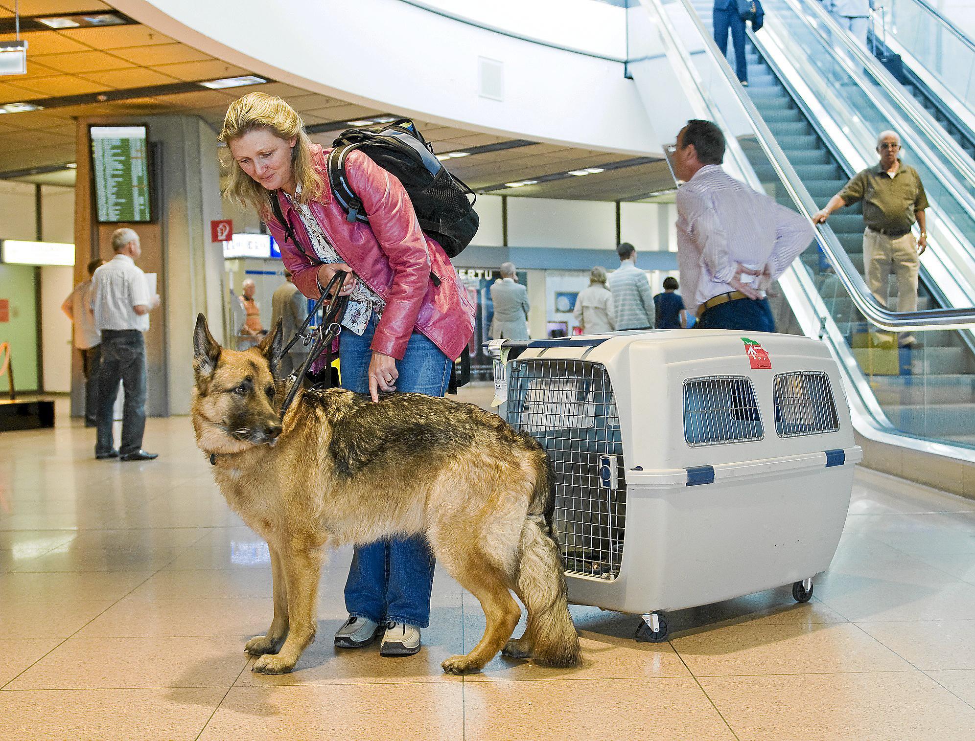 Air Berlin Hunde