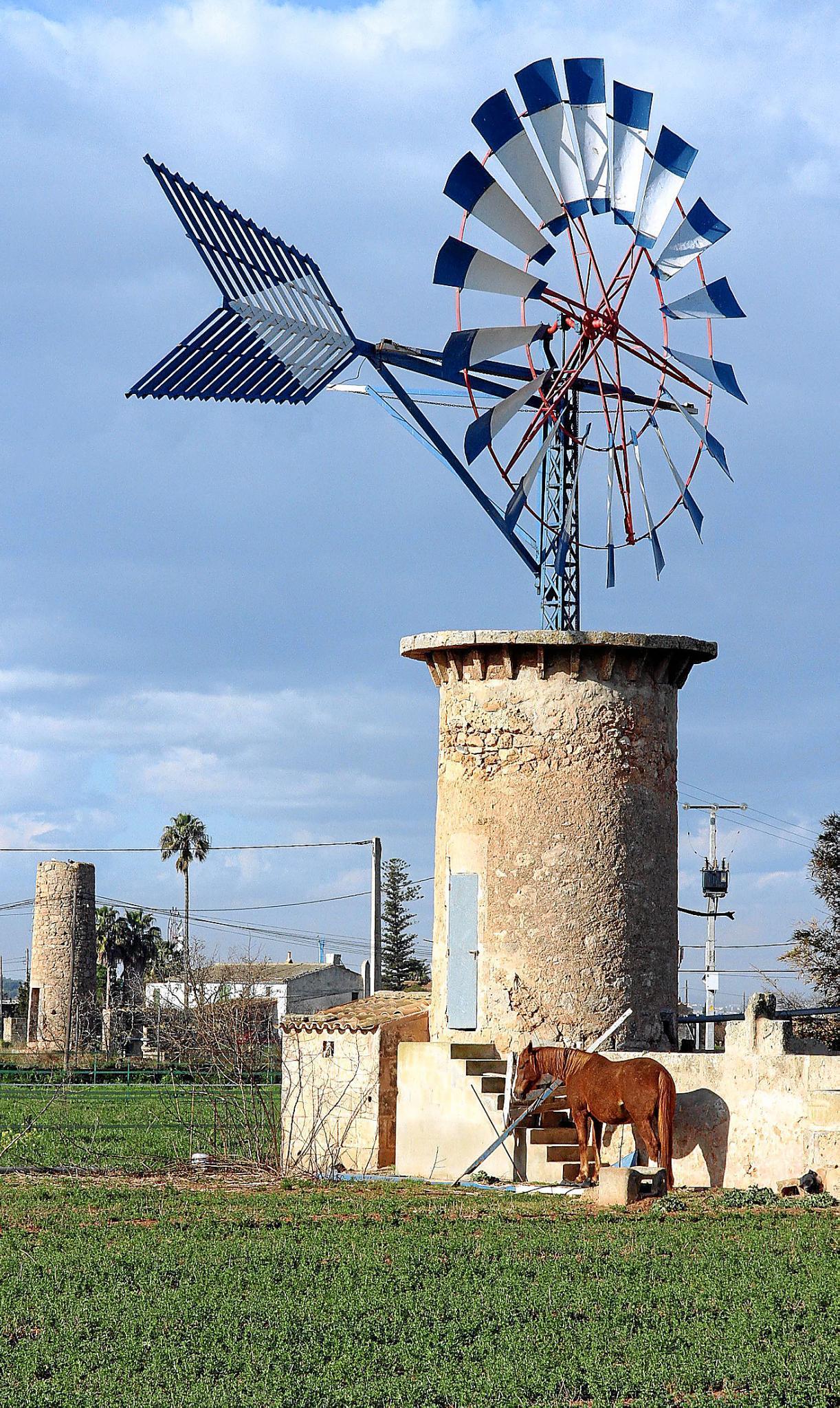 So kamen die vielen Windmühlen nach Mallorca