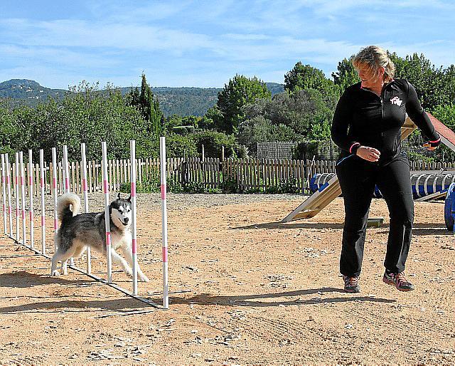 Ein Team Aus Hund Und Frauchen