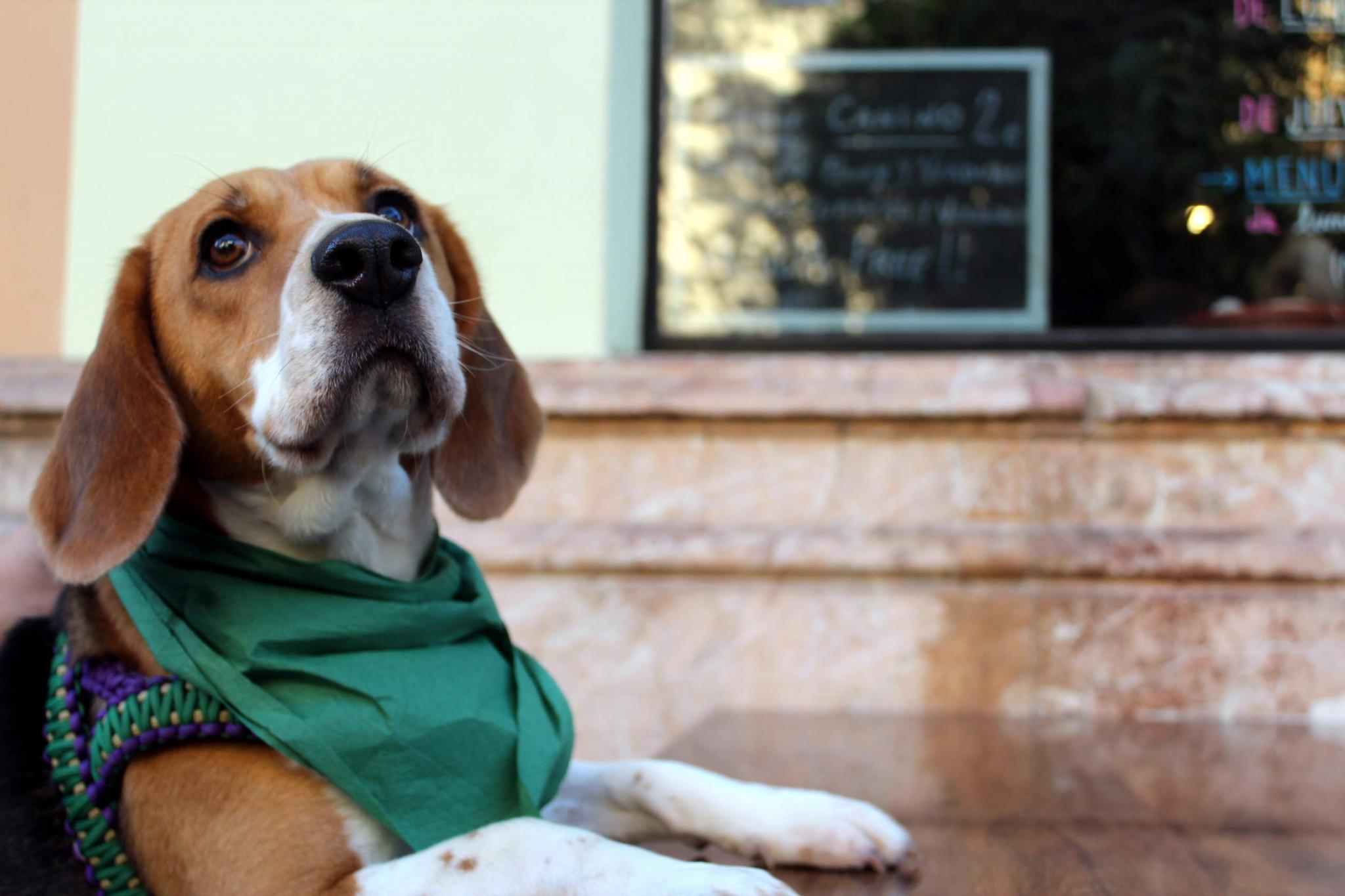 Mieterkundigung Wegen Hundehaltung Rechtens